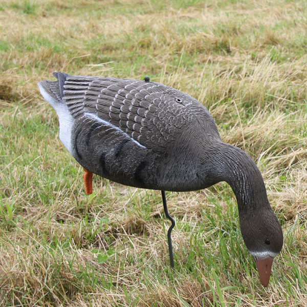 Lockvogel Blässgans mit Erdspieß