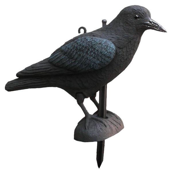 Lockvogel Krähe